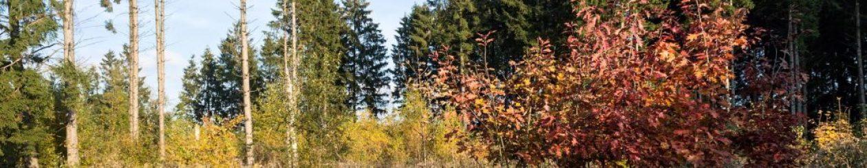 Westerwald-Fotos