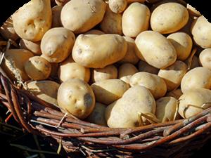 Kartoffeln im Weidenkorb