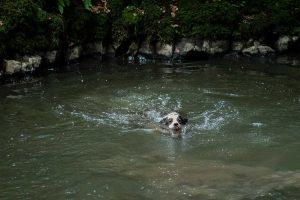 Kira schwimmt zurück