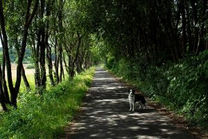 schattiger Weg