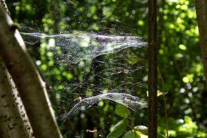 ...und bizarren Spinnweben...