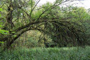 ...und bogenförmigen Bäumen...