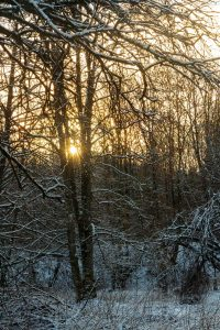 Sonnenuntergang in der Bacher Lay