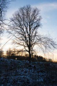 Baum am Ende des Nisterpfads