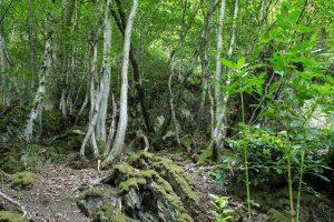 Bäume auf dem Weltendeweg