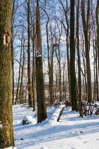 Bad Marienberger Winterwald