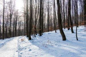 Winterwald bei Bad Marienberg