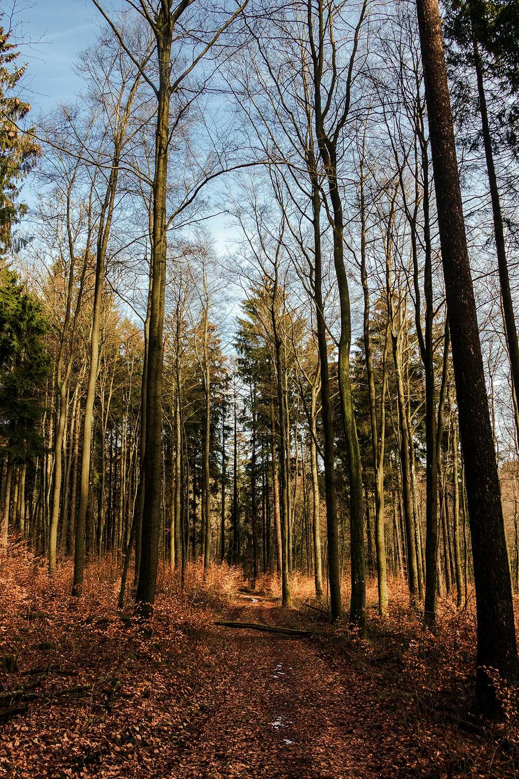Waldweg zur Nister