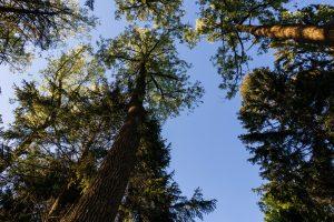 Bäume am Hasenbahnhof