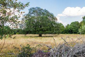 Weide im NSG Rosenheimer Lay
